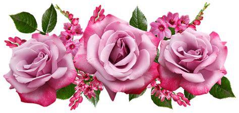 bunga mawar ixias foto gratis  pixabay