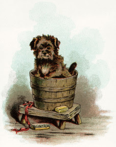 puppy bath, vintage puppy clipart, dog in tub, vintage dog image, old fashioned dog graphic