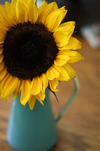 Sunflower by jenib320