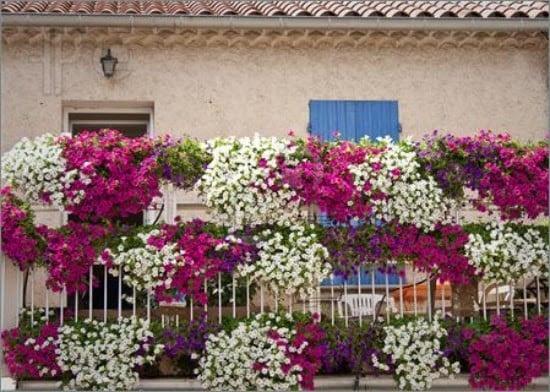 balkonbepflanzung vorschl ge bar n ki isel blo u. Black Bedroom Furniture Sets. Home Design Ideas