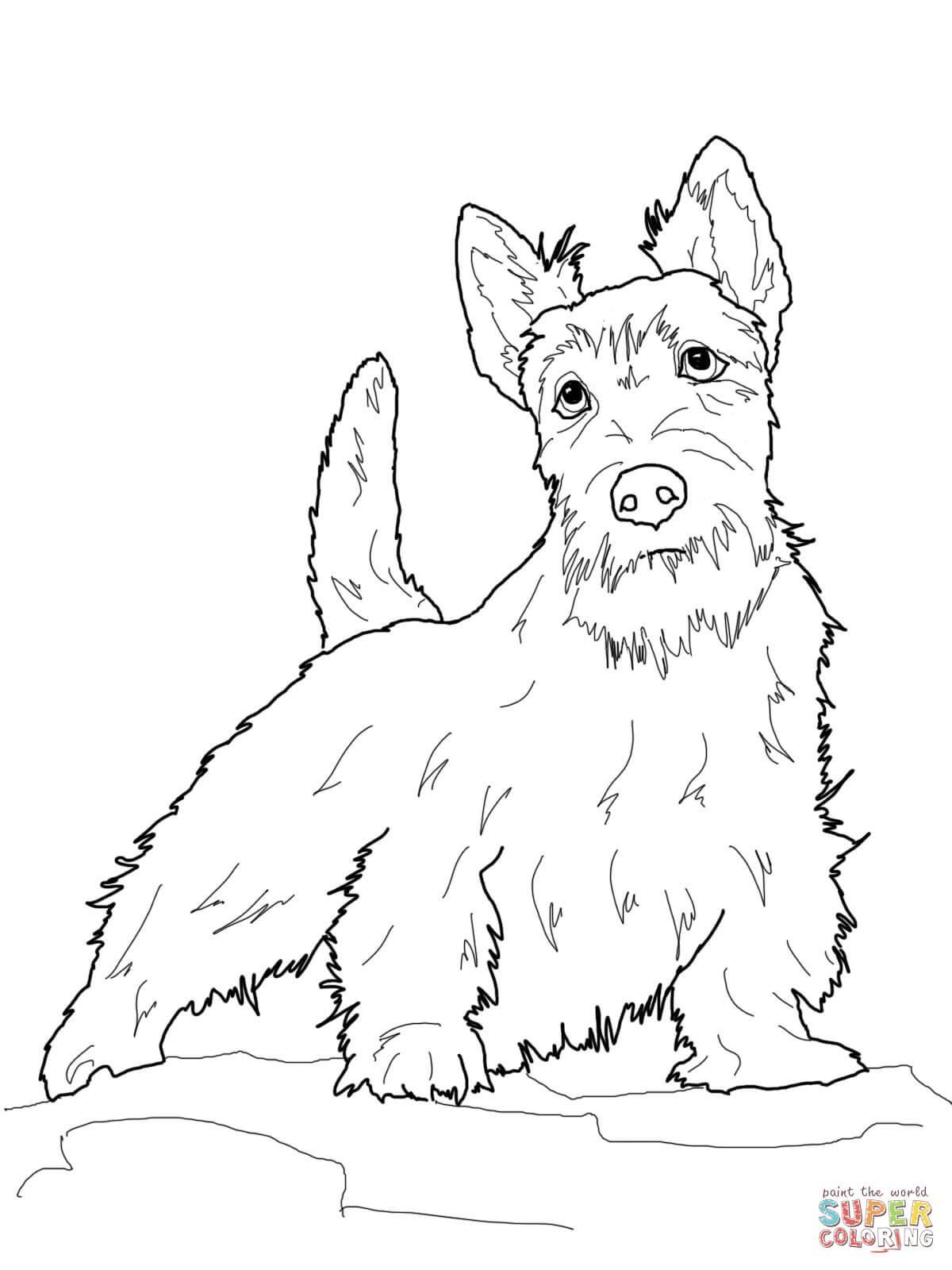 elegante kleurplaat boxer hond krijg duizenden