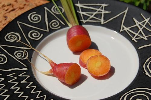 Purple Dragon carrot