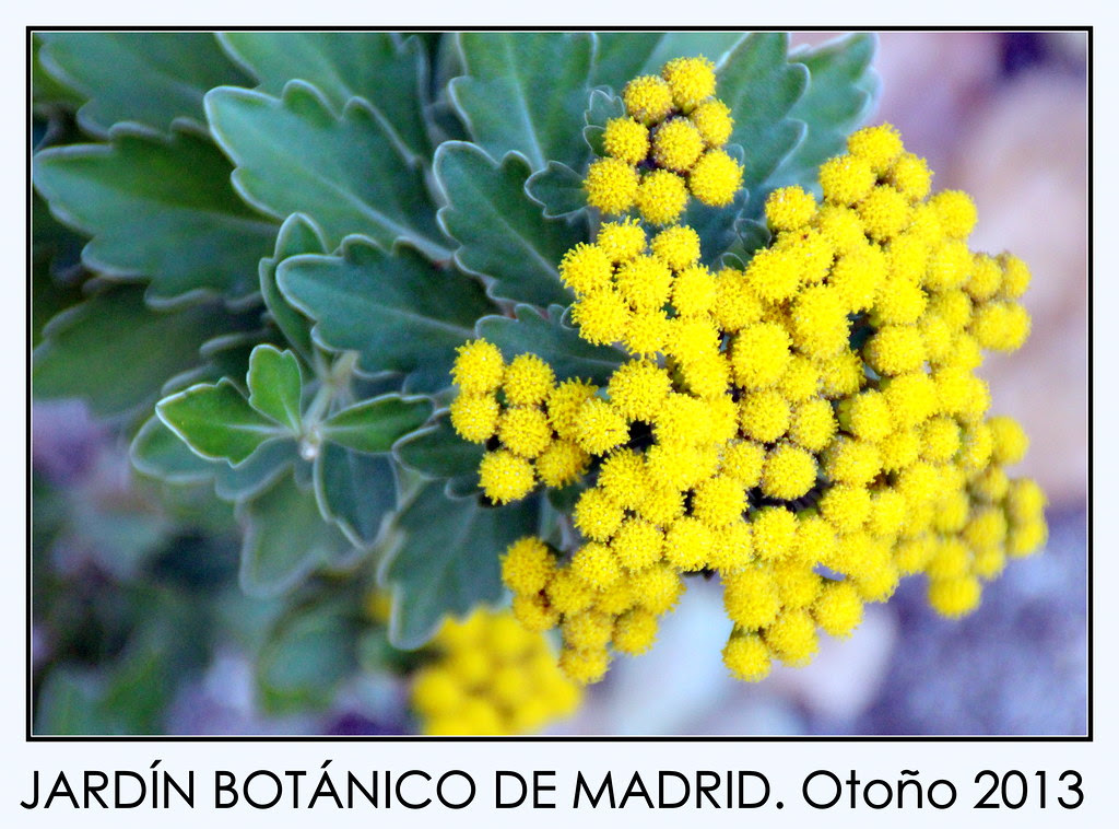 del Jardín Botanico de Madrid en noviembre de 2013-317