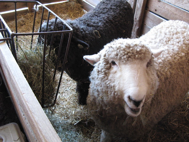 2012 NH Sheep and Wool Festival