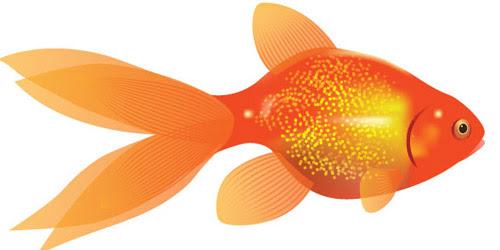 goldfish illustration