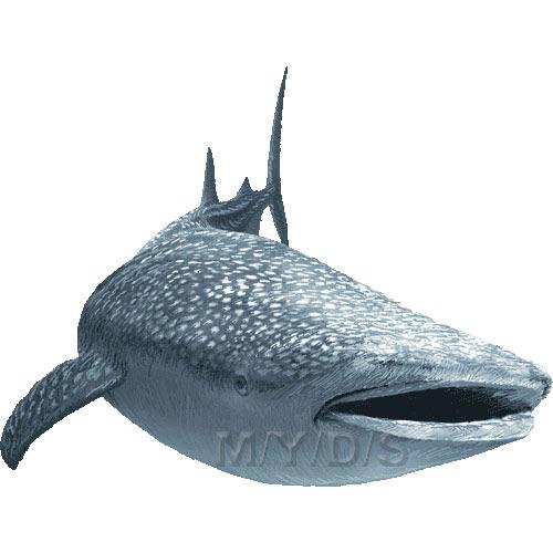 甚平鮫ジンベエ ザメサメのイラスト条件付フリー素材集