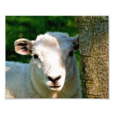 CUTE LITTLE SHEEP PHOTO PRINT