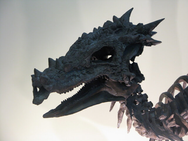 Dracorex skull