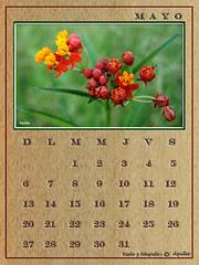 May Calendar Wood