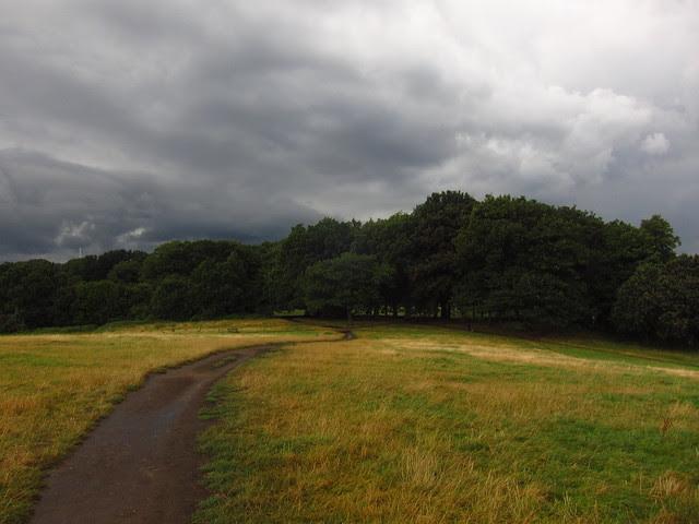 Hampstead Heath Trees seen from Parliament Hill