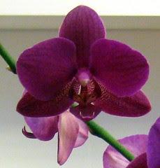 007 orchids