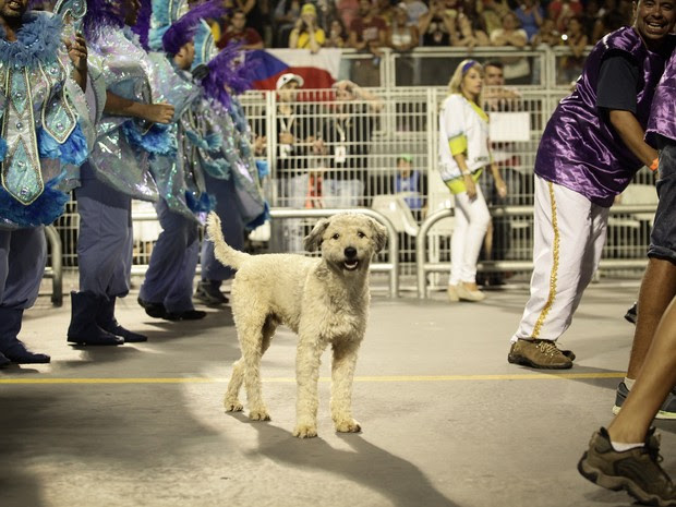 """Cachorro emociona público no Anhembi no desfile da Peruche ao """"ajudar a empurrar"""" carro alegórico. (Foto: Caio Kenji/G1)"""