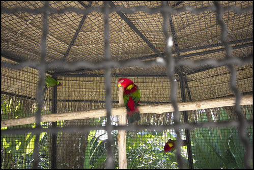 Parrot type things