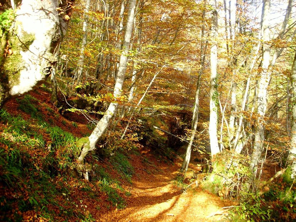Bosque de Lindes 023