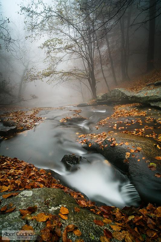 Water and Fog | Aigua i boira