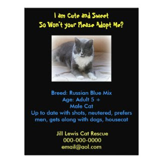 Cat Adoption Template Flyer