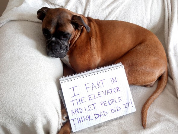 6.17.16 - Dog Shaming - Father's Day Edition24