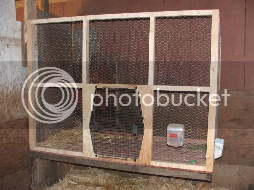 Flemish Giant Rabbit Cage - photo#11