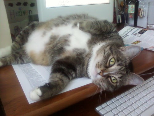 mabel cat lounging on my desk