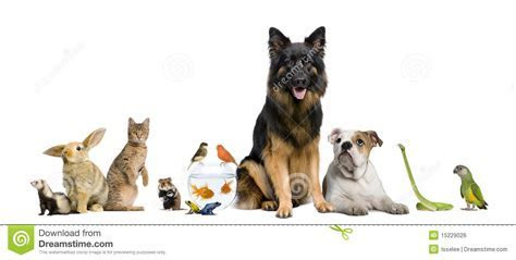 Group Of Pets Together Royalty Free Stock Image   Image: 15229026