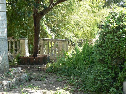 jardin abandonné.jpg