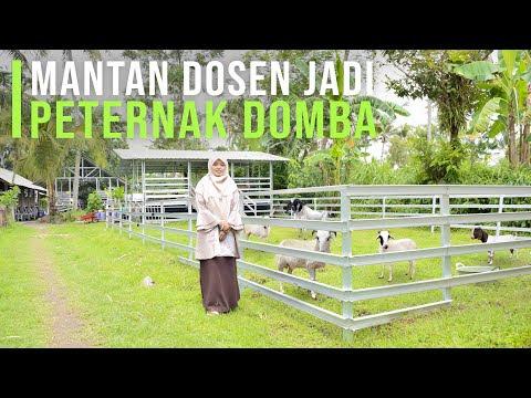 Resign Dari Dosen Kini Sukses Ternak Domba & Penggerak Pemuda Untuk Berternak