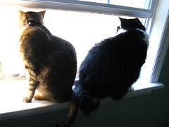 Maggie and Josie in the bedroom window