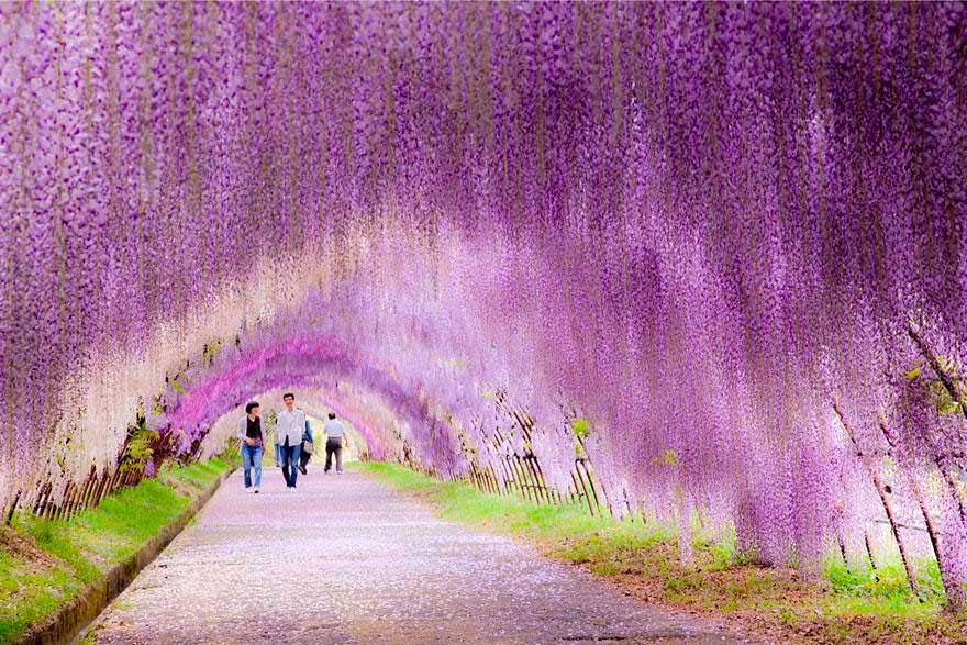 mindphoto.blog.fc2.com