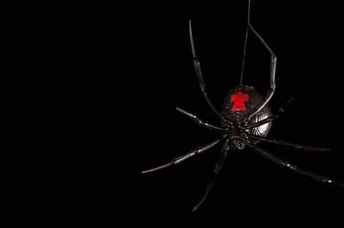 03-creepy-spiders-ngsversion-1477830633299-adapt-885-1