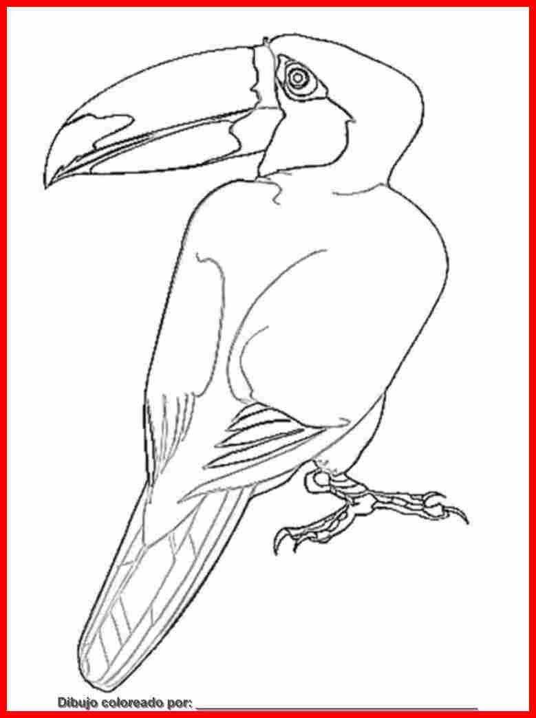 Dibujo De Aves Para Colorear E Imprimir