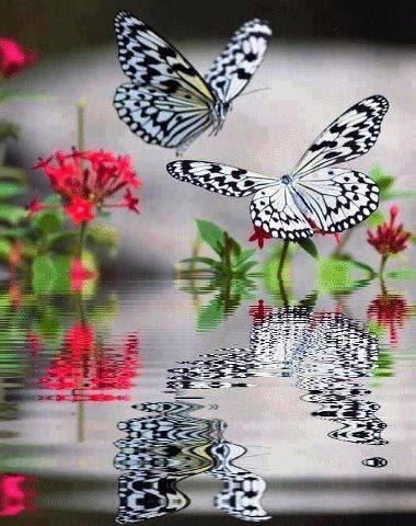 beautiful butterfly reflection ❤