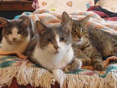 Meenie, Eenie, and Lucy