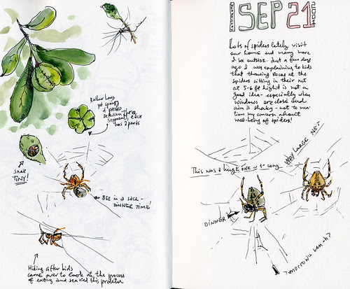September 2011: Spiders by apple-pine
