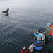 Large numbers of whales have congregated off Monterey Bay to the delight of camera-wielding whale watchers like the ones aboard Nancy Black's Sea Wolf II.
