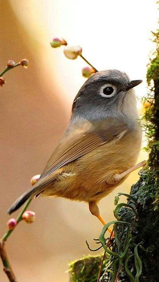 Gizli bahçe içinde yaşıyor kuş.  O, gün boyu twirps ve kızın en iyi arkadaşıdır.