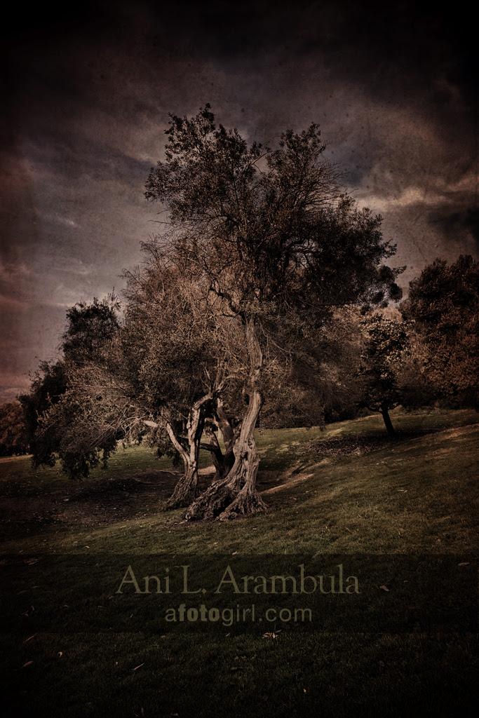 Stockton Tree study no.1