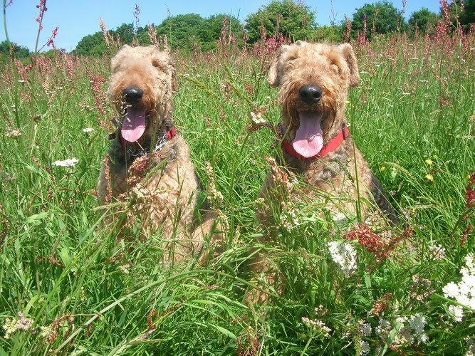 Pretty Meadow girls