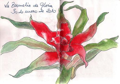 Bromeliad in watercolor