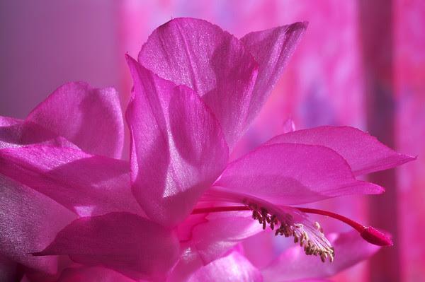 seasonal pink