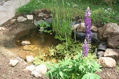 New wildlife pond