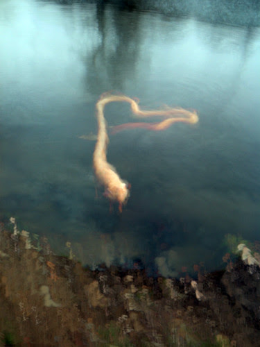 Slowshutter of dog swimming por Nad