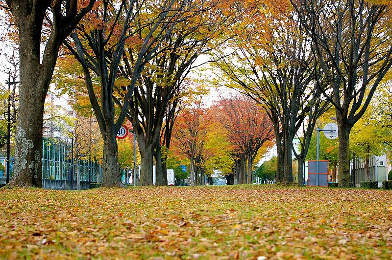 File:OroshimachiSt.jpg