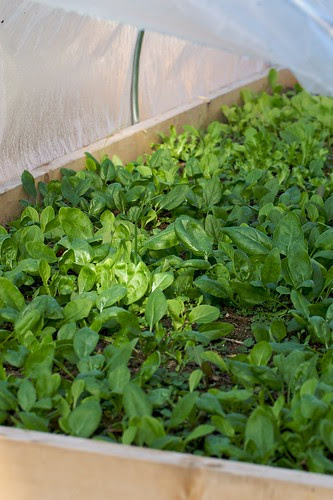 Four Season Gardening