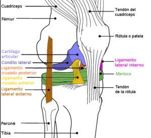 Knee Surgery (ACL Reconstruction) Journal - Memento