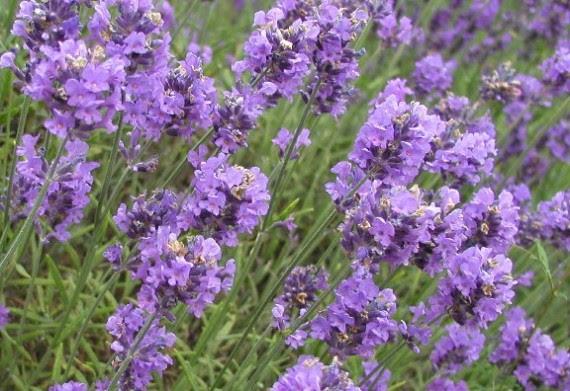 perierga.gr - Γνωστά φυτά με... άγνωστες θεραπευτικές ιδιότητες!
