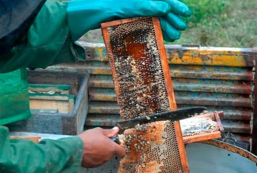 0117-apicultores-camaguey.jpg