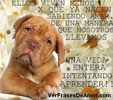 Imagenes De Amor A Los Animales Descargar Imagenes Gratis