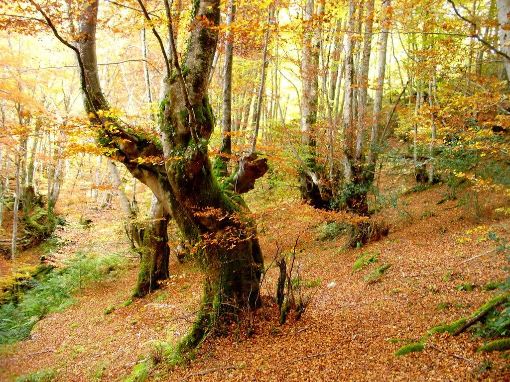 Bosque de Lindes 029