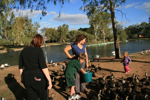 Duck feeding at Oakden