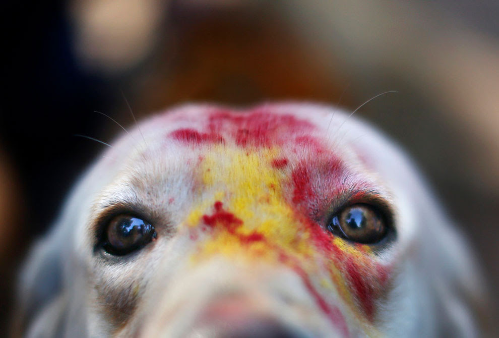 6123 Dog Worship Day in Nepal